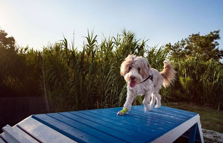 Dog beaches 7